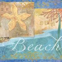 Seashells II by Fiona Stokes-Gilbert - various sizes