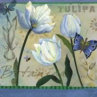 Tulipa Botanica by Fiona Stokes-Gilbert - various sizes - $25.49