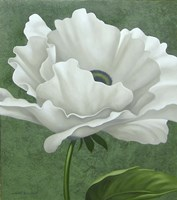 White Poppy by John Zaccheo - various sizes, FulcrumGallery.com brand