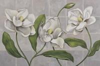 White Magnolia by John Zaccheo - various sizes - $30.49