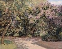 Lilac Trees Fine Art Print
