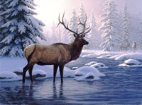 Elk In Winter Fine Art Print