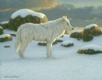 White Wolf by Richard Burns - various sizes