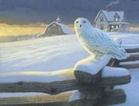 Northern Guest Fine Art Print