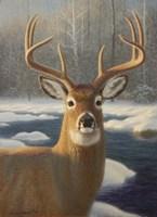 White Tail Deer Portrait Fine Art Print