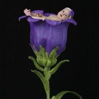 Bailey Kjersten Purple Trumpet Framed Print