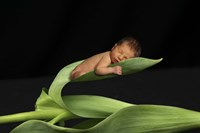 T. Foucas Baby Leaves Fine Art Print