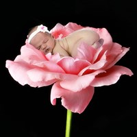 Baby Snuggling On Flower Fine Art Print