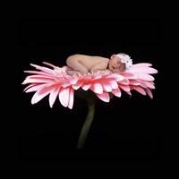 Winget Malissa Pink Daisy Framed Print
