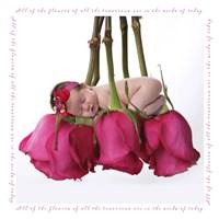 Tripp Baby On Roses Framed Print