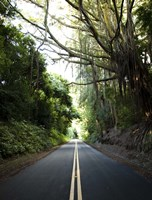 Old Pali Road Fine Art Print