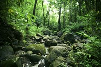 Manoa Stream Fine Art Print