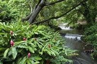 Nuuanu Stream 1 by Cameron Brooks - various sizes