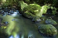 Nuuanu Stream 2 by Cameron Brooks - various sizes