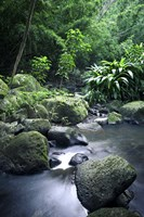 Nuuanu Stream Vertical by Cameron Brooks - various sizes