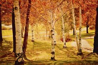 Autumn Woods by Celia Kelly - various sizes
