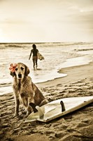 Dog Surfer Fine Art Print