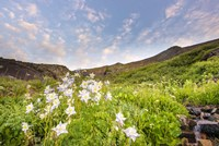 Columbine Morning II by Dan Ballard - various sizes