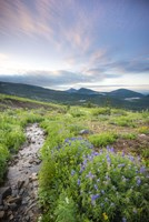 Crested Butte Stream by Dan Ballard - various sizes