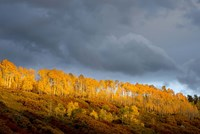 Golden Light by Dan Ballard - various sizes