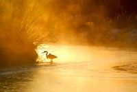 Glowing Mist by Dan Ballard - various sizes