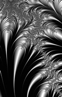 Plumes Black and White by DesignPics - various sizes