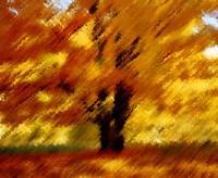 Autumn by DesignPics - various sizes