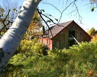 Overgrown Barn by Stephen Goodhue - various sizes