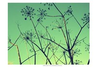 Cow Parsley I Fine Art Print