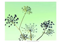 Cow Parsley II Fine Art Print