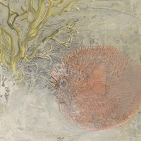 Coastal Cameo VIII by June Erica Vess - various sizes