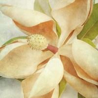 Vintage Magnolia I Fine Art Print