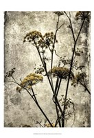 Big Sur Yarrow II Fine Art Print