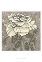 "Silver Rose I by Chariklia Zarris - 13"" x 19"""