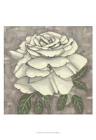 Silver Rose II Framed Print