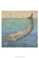Diving Whale I Framed Print