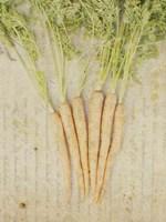 Herb Still Life III Fine Art Print