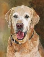 Rex Golden Retriever Fine Art Print