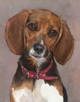 Lucy English Pocket Beagle Fine Art Print