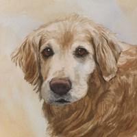 Chelsea Golden Retriever Fine Art Print
