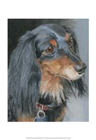 Natalie Long-haired Dachshund Fine Art Print