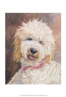 Honey Goldendoodle Fine Art Print