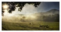 """Running in the Mist by Danny Head - 38"""" x 20"""""""