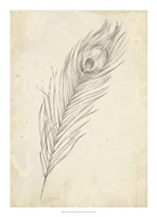 "Peacock Feather Sketch II by Ethan Harper - 16"" x 22"""