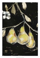 Fresh Pears I Fine Art Print