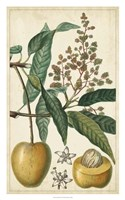 """Exotic Fruits III by Pierre Jean Francois Turpin - 20"""" x 32"""""""