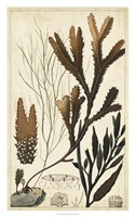 Turpin Seaweed I Fine Art Print