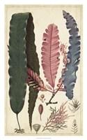Turpin Seaweed II Fine Art Print