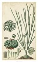 Turpin Seaweed VI Fine Art Print