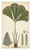 Foliage Botanique I Fine Art Print